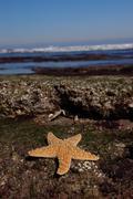 starfish in tide pool at low tide ocean beach - stock photo