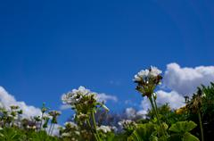 White Flowers And Clouds - stock photo