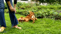 Dog next to girl in the garden Stock Footage
