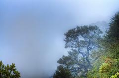 grand canyon fog - stock photo