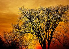 landscape photo of trees in sunset in deep autumn - stock photo