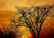 Stock Photo of landscape photo of trees in sunset in deep autumn