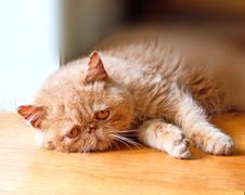 Poor cat lying on the floor Stock Photos