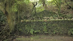 Bali Indo burial ground - stock footage