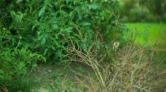 Poaching hunt hunter Stock Footage