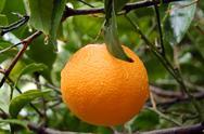 Fresh orange with raindrops Stock Photos