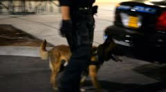 Police K9 Stock Footage