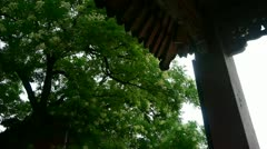 Chinese ancient building eaves under lush green trees,breeze blowing leaves. Stock Footage