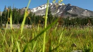 Mt Shasta 01 Dolly R Panther Meadows Stock Footage