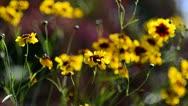 Wild Flowers shaken by the wind Stock Footage