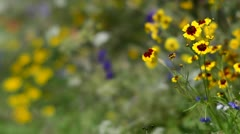 Wildflowers moving in a gentle breeze Stock Footage