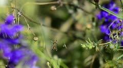 Spiders mating Stock Footage