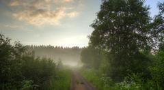 Meadow with fog Stock Photos