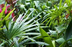 Tropical garden at tropic island Stock Photos