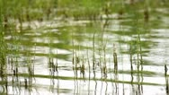 Waves in  a pond Stock Footage