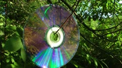 Laser disk hangs on a branch and reflects the wood from the surface Stock Footage