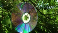 Stock Video Footage of Laser disk hangs on a branch and reflects the wood from the surface
