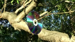 Laser disk with reflection from the surface of the wood hangs on a branch Stock Footage