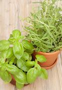 Potted herbs - basil and rosemary Stock Photos
