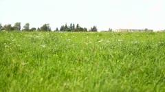 Meadow, rural landscape, twisting Stock Footage