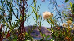 Weeds and blossom Stock Footage