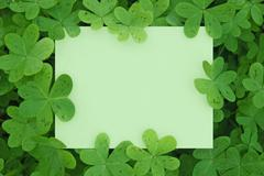 clover card - stock photo