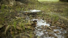 Water Trickling on Ground - stock footage