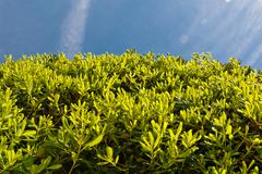 Stock Photo of green leaves over the blue sky