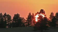 Closeup of Sunset behind Trees Stock Footage