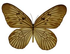 amber colored butterfly - stock illustration