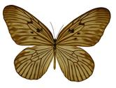 Stock Illustration of amber colored butterfly