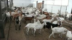 Goats farm Stock Footage
