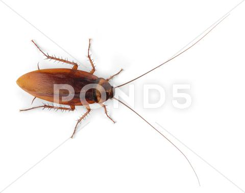 Stock photo of cockroach