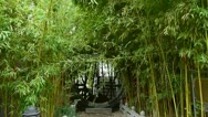 Wind shaking bamboo forest,Oriental classical door,green patio courtyard. Stock Footage