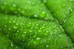 fresh green leaf with water droplets (shallow dof) - stock photo
