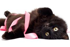 black cat playing with pink ribbon - stock photo