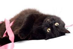 Stock Photo of black cat playing with pink ribbon