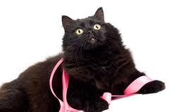 black cat with pink ribbon isolated - stock photo