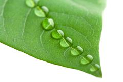 Green leaf with water droplets isolated Stock Photos