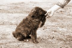 Lonely homeless dog and helping human hand Stock Photos