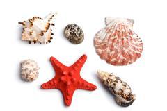Stock Photo of sea shells isolated