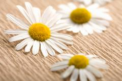 Stock Photo of camomile flowers over recycled paper. ecological background