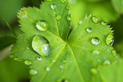 Fresh green leaf with water droplets Stock Photos