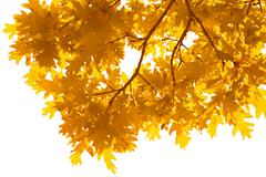 Frame of autumn leaves isolated Stock Photos