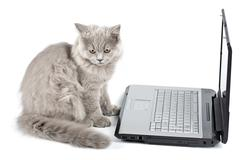 british kitten in front of laptop isolated - stock photo