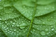 fresh leaf with water droplets - stock photo