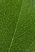 Stock Photo of leaf texture
