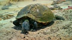 Large turtle eats Stock Footage