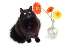 black cat and flowers - stock photo