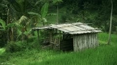 Tropical rural landscape Stock Footage